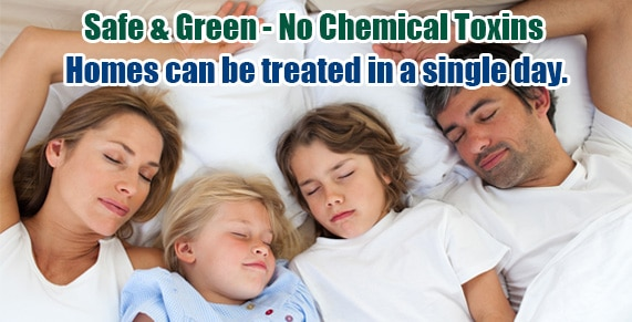 Chemical Free Westchester County Bed Bug Treatment , Chemical Free Bed Bug Treatment Westchester County , Get Rid of Bed Bugs Westchester County , Bed Bug Spray Westchester County , What to do Bed Bugs look like Westchester County , Kill Bed Bugs Westchester County , Bed Bug Treatment Westchester County