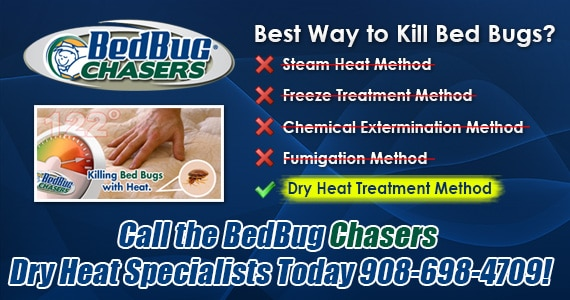 Bed Bug Pictures Westchester NY , Chemical Free Bed Bug Treatment Westchester NY , Get Rid of Bed Bugs Westchester NY , Bed Bug Spray Westchester NY , What to do Bed Bugs look like Westchester NY , Kill Bed Bugs Westchester NY , Bed Bug Treatment Westchester NY , Bed Bug Dog Westchester NY , How to get Rid of Bed Bugs Westchester NY , Bed Bug Heat Treatment Westchester NY , Bed Bug Eggs Westchester NY , Bed Bug Exterminator Westchester NY , Bed Bug Images Westchester NY , Bed Bug Inspection Westchester NY