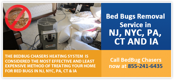 Get Rid of Bed Bugs Westchester County , Bed Bug Spray Westchester County , What to do Bed Bugs look like Westchester County , Kill Bed Bugs Westchester County , Bed Bug Treatment Westchester County , Bed Bug Dog Westchester County